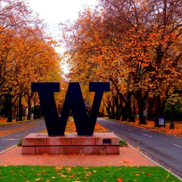 University of Washington W